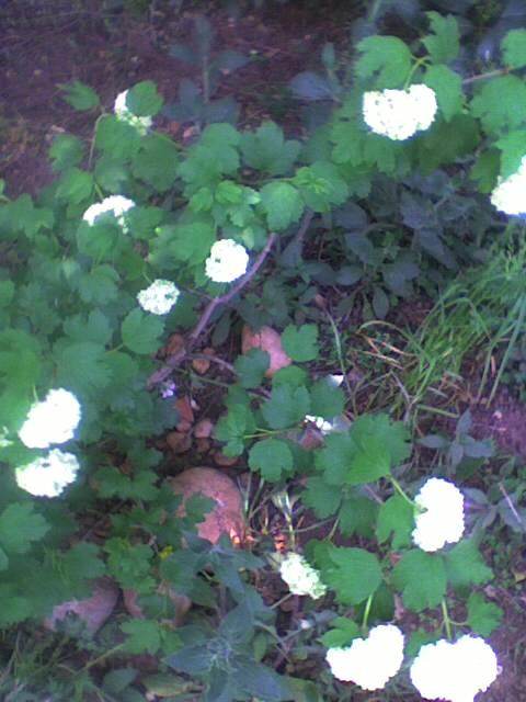 Fleurs en cascade Photo_55