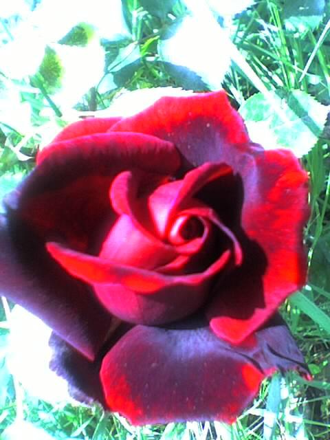 Fleurs en cascade Photo_59