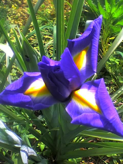 Fleurs en cascade Photo_60