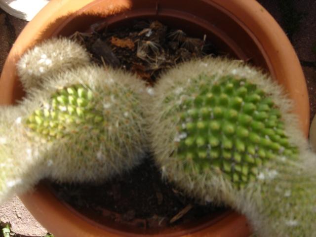 Problème sur un cactus Copie_11