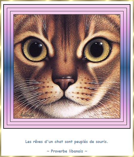 Les citations en images : Les chats Gi-cit11