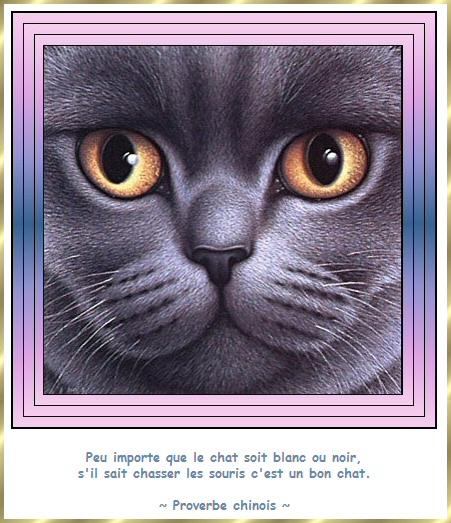 Les citations en images : Les chats Gi-cit12