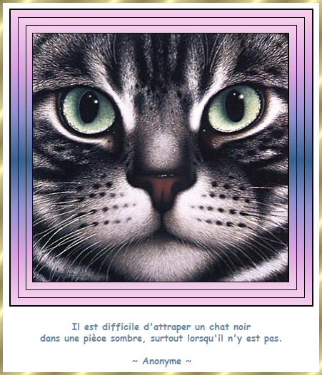 Les citations en images : Les chats Gi-cit13