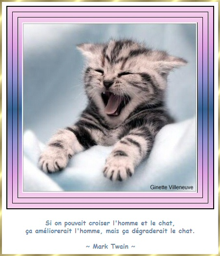 Les citations en images : Les chats Gi-cit14