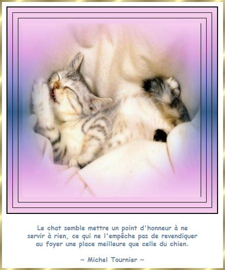 Les citations en images : Les chats Gi-cit16