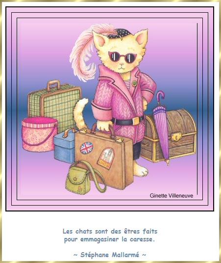 Les citations en images : Les chats Gi-cit17