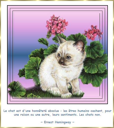 Les citations en images : Les chats Gi-cit18