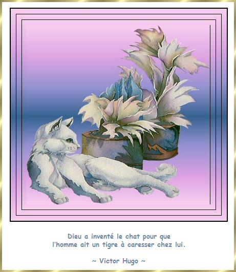 Les citations en images : Les chats Gi-cit19