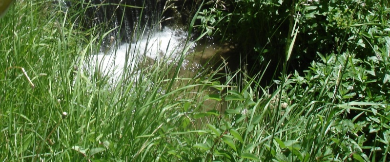 pêche à la barre dans le Cantal Dsc00012