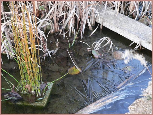 le bassin de Belle des Champs P1170329