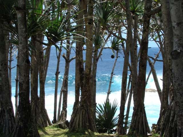 voyage à la Réunion Dsc04410