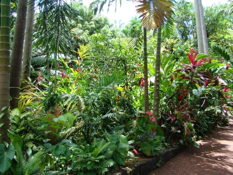 voyage à la Réunion Dsc04411