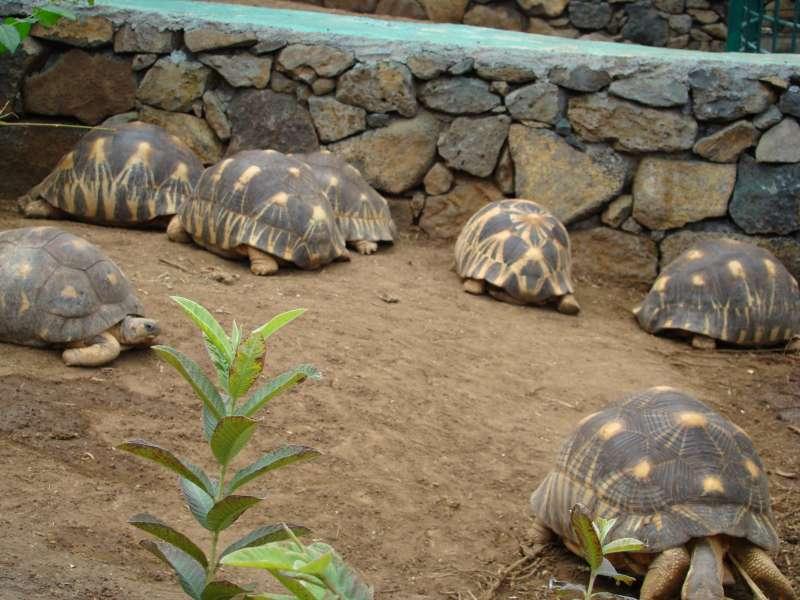voyage à la Réunion Dsc05214