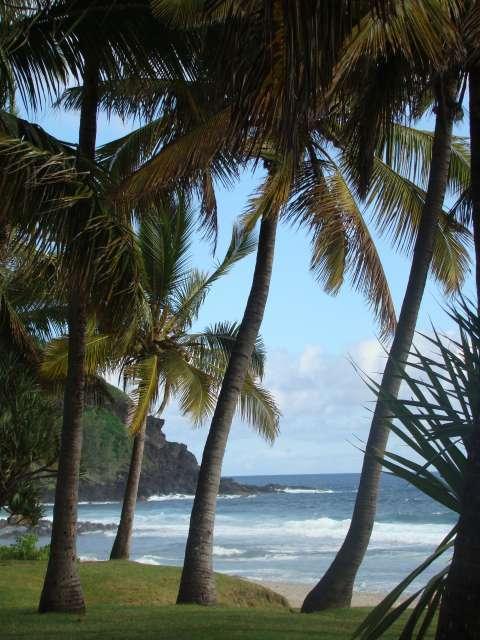 voyage à la Réunion Dsc05513