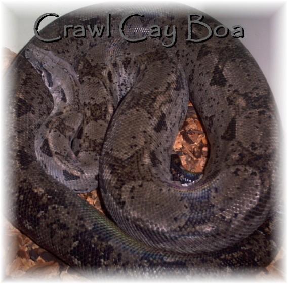 Crawl Cay or not Crawl Cay??? Crawl210