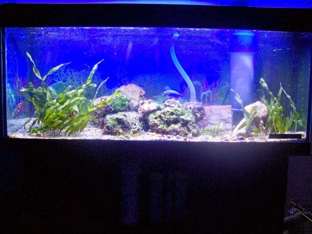 Mon bac Marin de 240 litres Aqua_010
