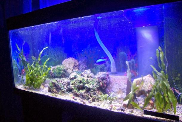 Mon bac Marin de 240 litres Aqua_011