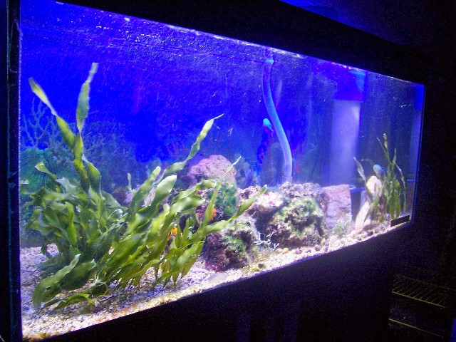 Mon bac Marin de 240 litres Aqua_012