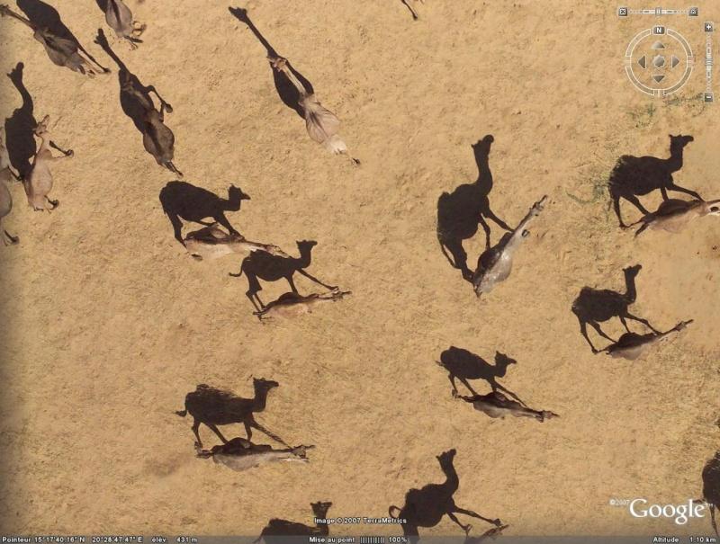 Rhinos dans la rivière - Page 2 Dromad10