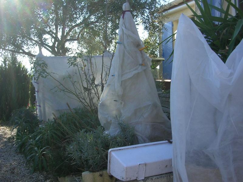 Protections hivernales ou jardin fantomatique Dscn5310