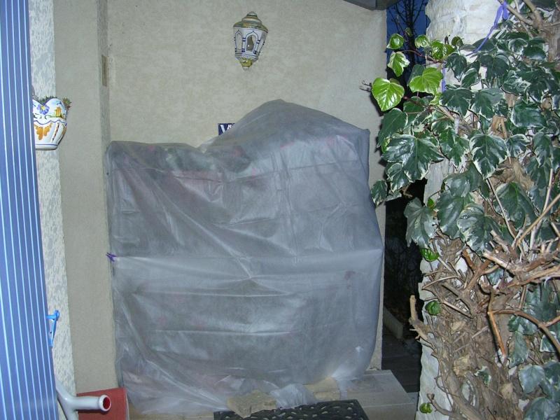 Protections hivernales ou jardin fantomatique Dscn5311