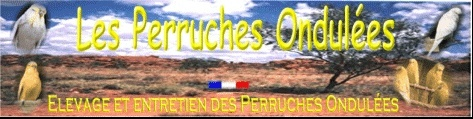 perruches ondulees de concours