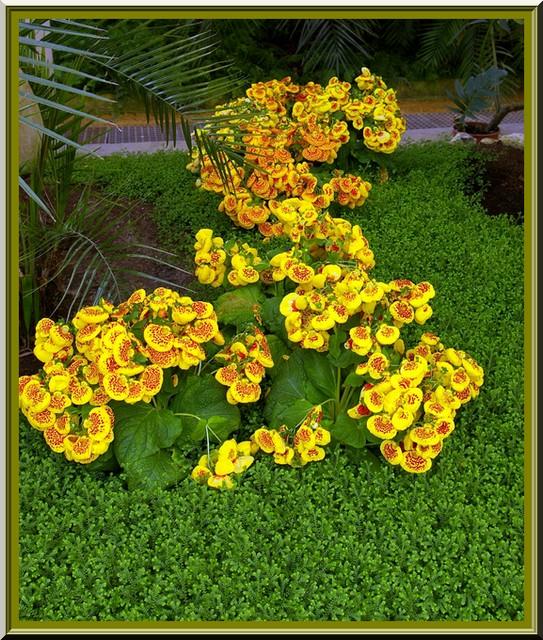 Des fleurs rien que des fleurs Sg1l2910