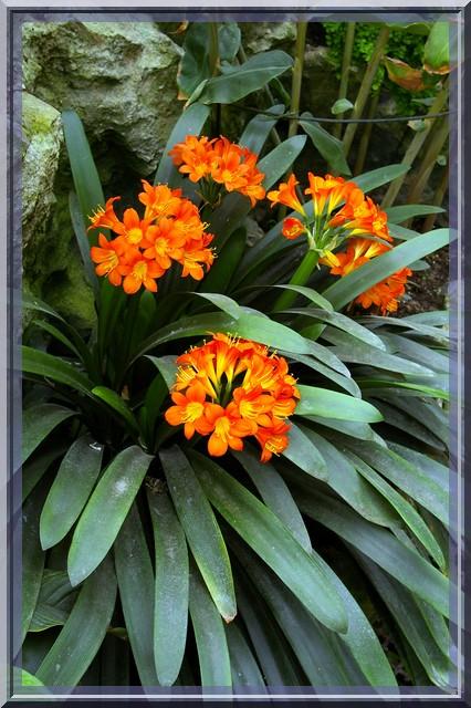 Des fleurs rien que des fleurs Sg1l2911