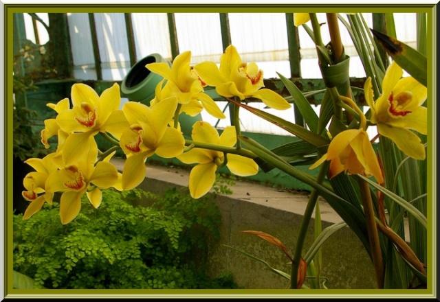 Des fleurs rien que des fleurs Sg1l2912
