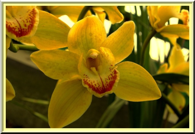 Des fleurs rien que des fleurs Sg1l2913