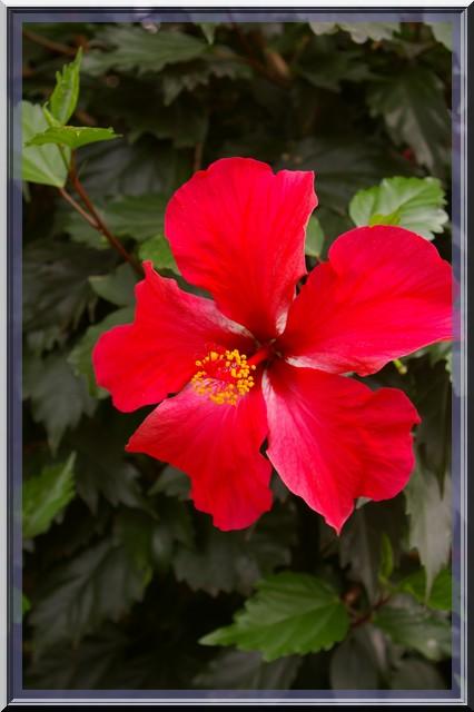 Des fleurs rien que des fleurs Sg1l2914