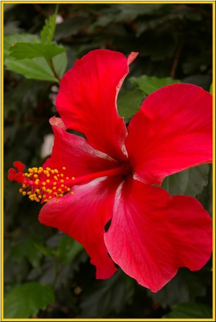 Des fleurs rien que des fleurs Sg1l2915
