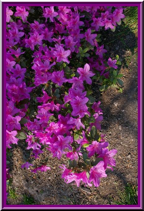 Des fleurs rien que des fleurs Sg1l2916