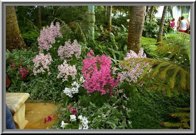 Des fleurs rien que des fleurs Sg1l2919
