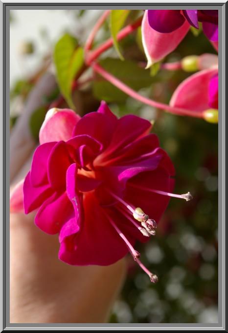 Des fleurs rien que des fleurs Sg1l3013