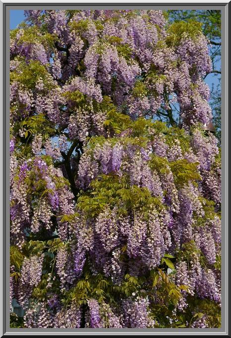 Des fleurs rien que des fleurs Sg1l3014