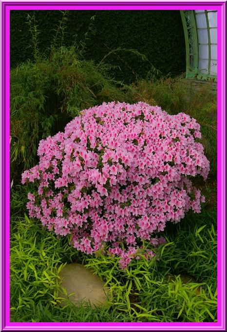 Des fleurs rien que des fleurs Sg1l3015