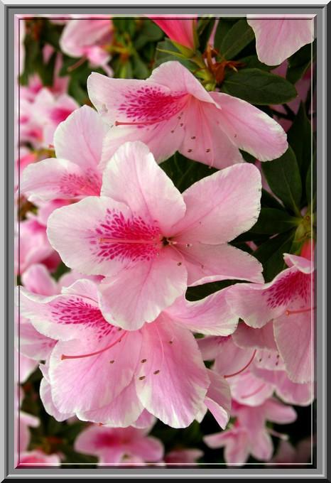 Des fleurs rien que des fleurs Sg1l3016