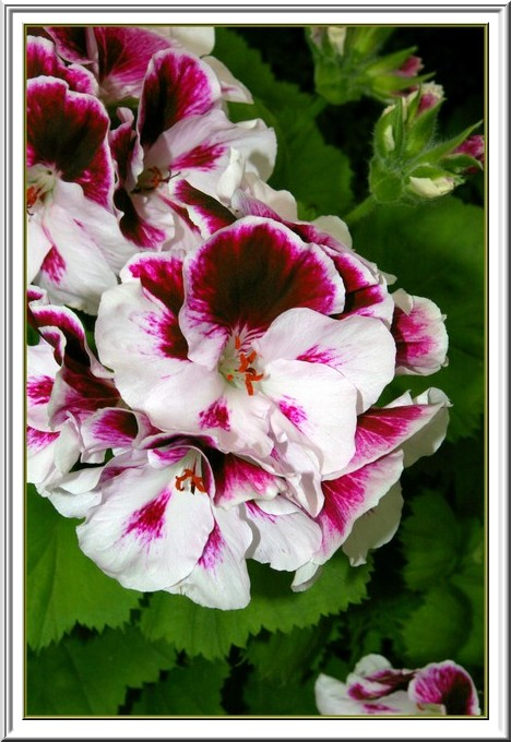 Des fleurs rien que des fleurs Sg1l3017