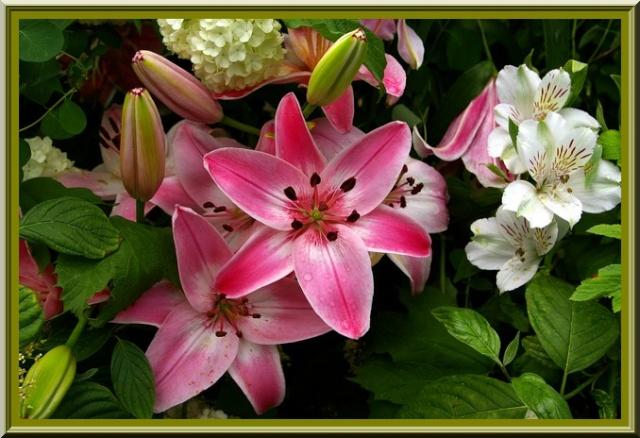 Des fleurs rien que des fleurs Sg1l3018