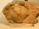 Musée de Montecchio Maggiore (VI) Dscn5113