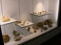 Musée de Montecchio Maggiore (VI) Dscn5216