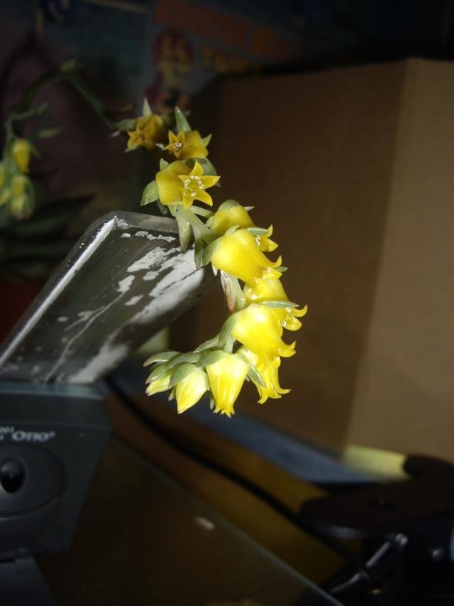 quelques unes de mes plantes Tortue11
