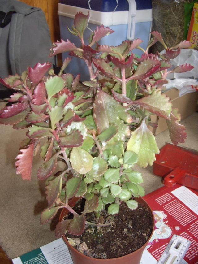 quelques unes de mes plantes Tortue15