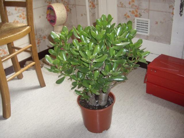 quelques unes de mes plantes Tortue16