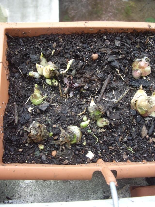 quelques unes de mes plantes Tortue19