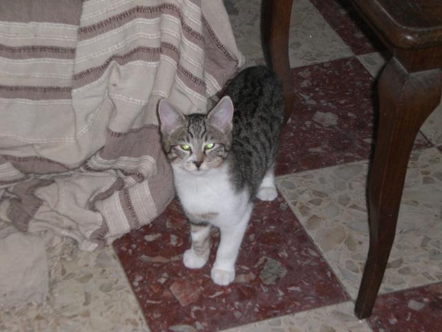 2 chaton male a adopter 60 Bebe210