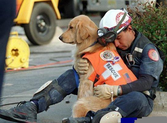 Le chien qui sauve.... Chiena11