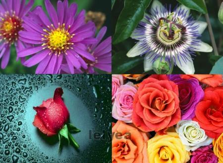 35 خلفية للحاسوب : زهور الربيع 35hqfl10