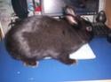 [rongeurs,...] Le lapin Lapin_12